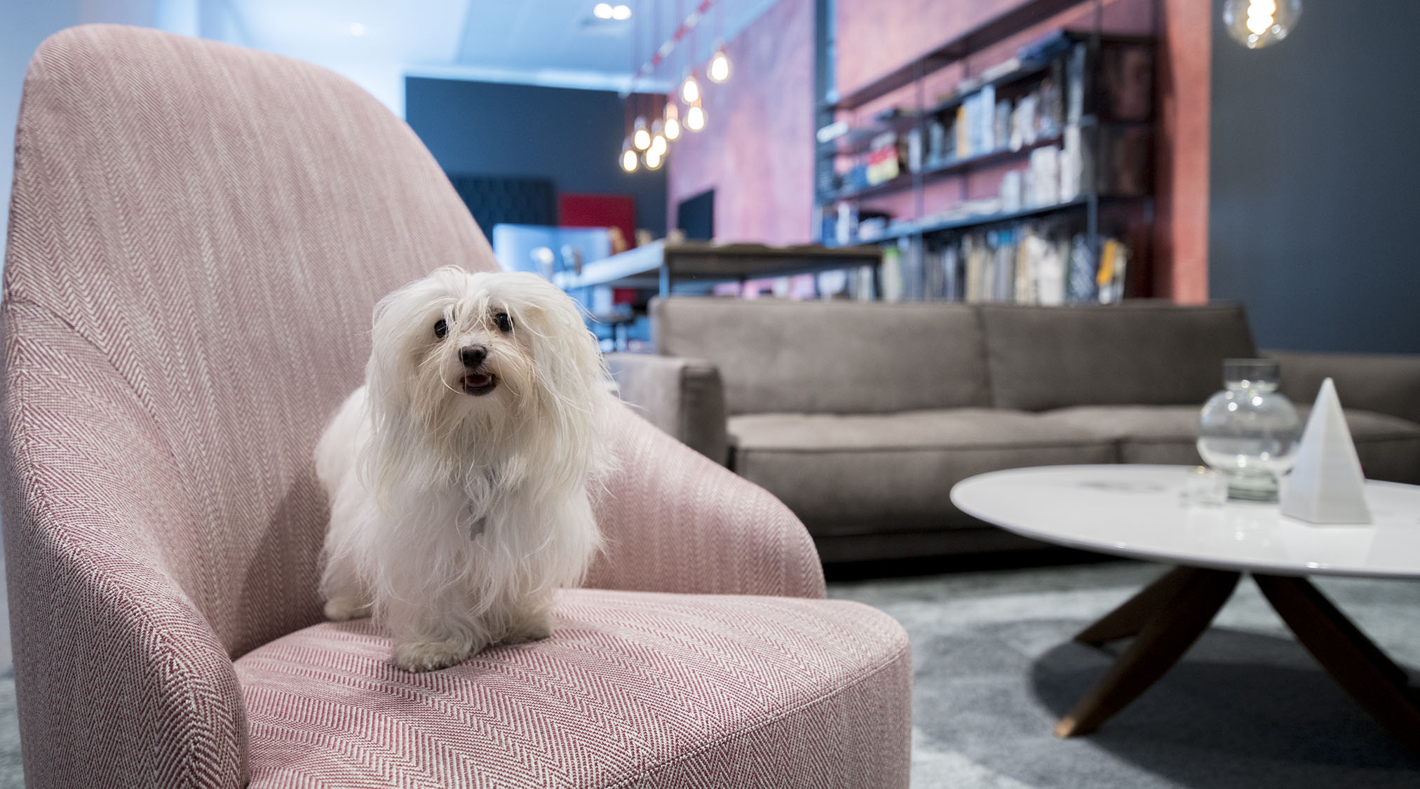 Berto Salotti都灵展厅制定沙发椅